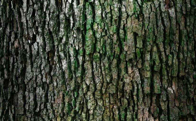 Przepiękny oraz {czysty zieleniec to nie lada wyzwanie, w szczególności jak jego konserwacją zajmujemy się sami.